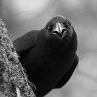 Raven_41